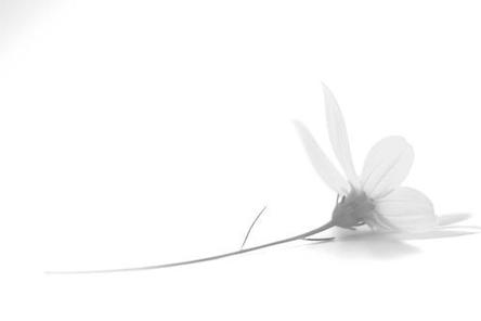 florblanca.jpg
