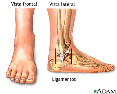 esguince de tobillo, anatonia normal